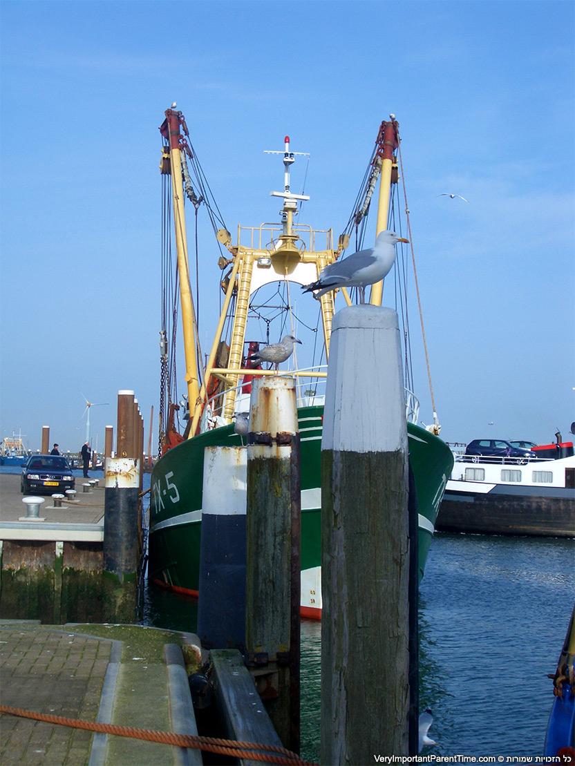 הולנד - טסל - הפלגה בספינת דייג שרימפס