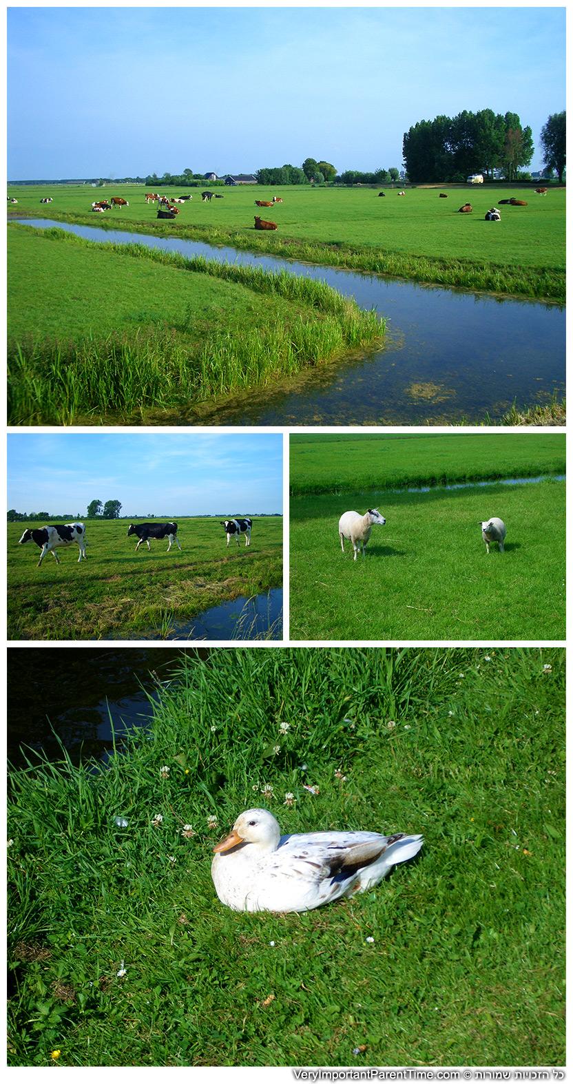 הולנד - בחיק הטבע